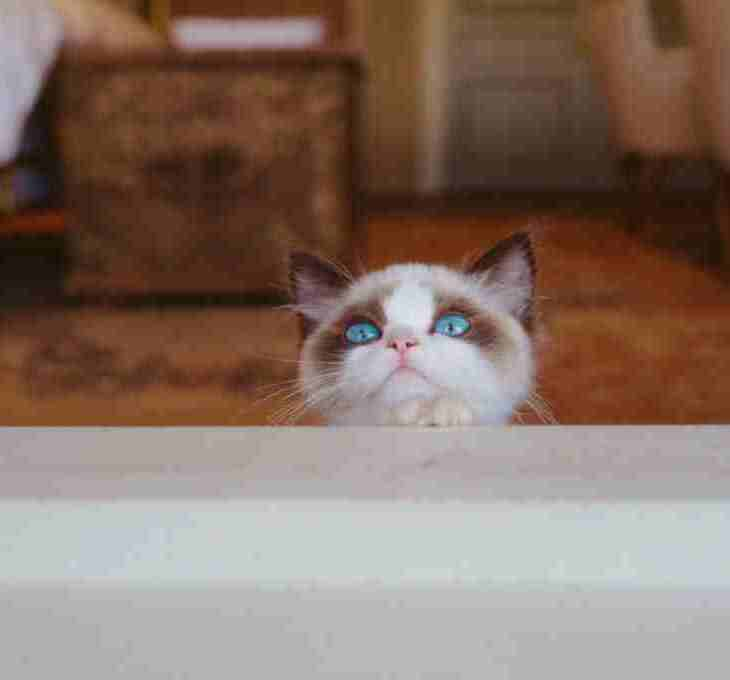 kenapa kucing takut dengan orang yourdevan.com