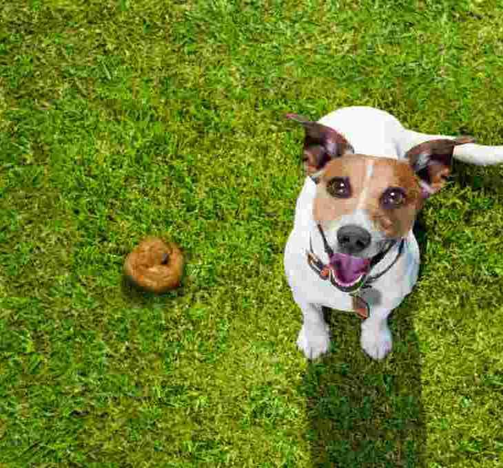 kenapa anjing makan kotorannya sendiri yourdevan
